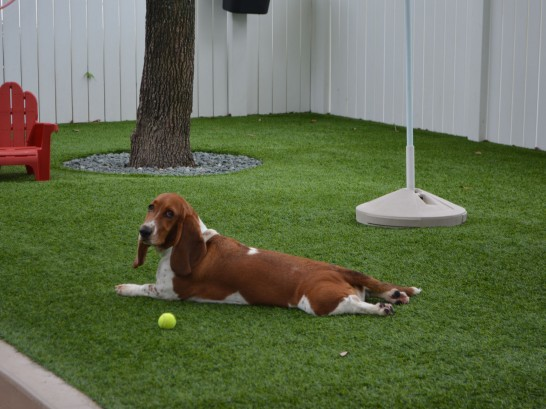 Artificial Grass Photos: Artificial Turf Cost Peralta, New Mexico Artificial Grass For Dogs, Dogs