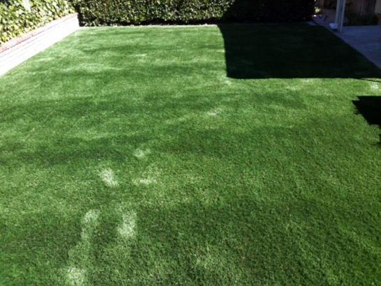 Artificial Grass Photos: Fake Grass Chamizal, New Mexico Dog Running, Backyard Design