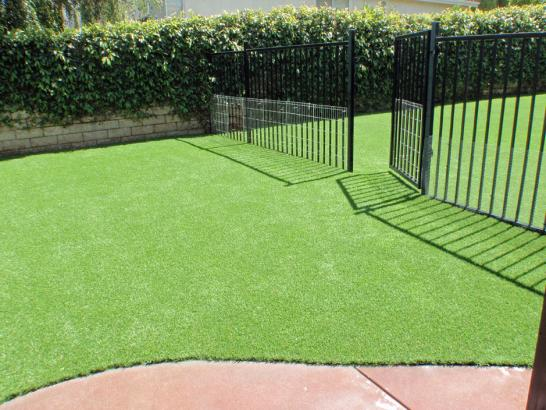 Artificial Grass Photos: Green Lawn Mimbres, New Mexico Watch Dogs, Front Yard Landscape Ideas